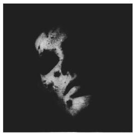 in solitude cover